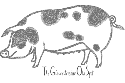 Gloucester old spot pig drawing