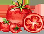 watercolour tomatoes
